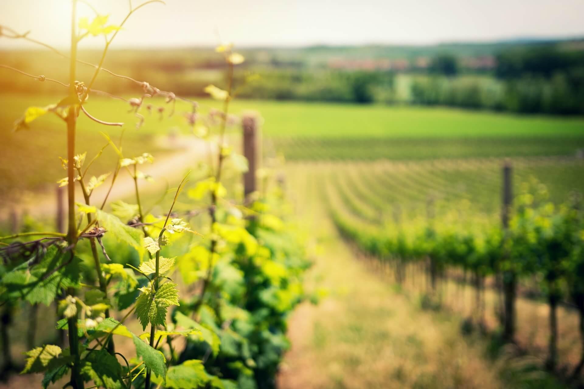 Treasury Wine Estates' multilayered plan to reduce impact of China's wine tariffs